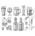 hand drawn beer set sketched design elements vector image