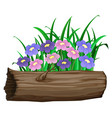 purple and pink flowers on white background vector image