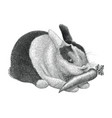 rabbit vintage scratchboard isolated on white vector image