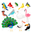 tropical and exotic birds set vector image vector image