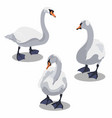 beautiful swanwhite grey swans cartoon goose vector image