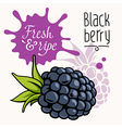 Blackberry concept 001 vector image vector image