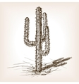 Cactus hand drawn sketch style vector image vector image