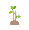 growing tree young plant or sapling flat icon vector image