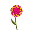 isolated cute flower icon vector image vector image