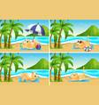 set cat at beach vector image