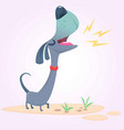 cartoon purebred dachshund vector image
