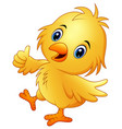 cute baby chicken with thumb up isolated on a whit vector image vector image