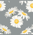 daisy chamomile field meadow spring summer white vector image