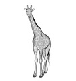 giraffe isolated on the white vector image vector image