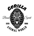 gorilla with angry grin emblem or t-shirt vector image