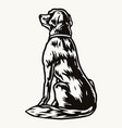 vintage concept dog with collar vector image