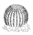 cactus sketch flower tattoo isolated on white vector image vector image
