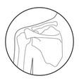 human shoulder skeleton vector image vector image