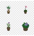 isometric flower set of flowerpot grower flower vector image vector image