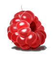 ripe red raspberry isolated on white background vector image vector image