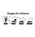 stages and phases a seizure depicts phases vector image