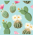 cactus with pink flowers on light background vector image vector image
