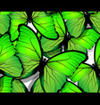 seamless butterfly pattern wings on white vector image vector image