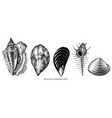 vintage engraving common shellfish black vector image