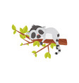 adorable lemur sleeping on tree branch exotic vector image vector image