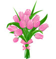 pink tulips with ribbon vector image vector image