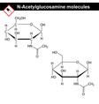 Acetylglucosamine NAG molecule vector image vector image