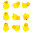 baby yellow chicken isolated on white icon set vector image