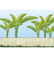 banana plants and a fence vector image
