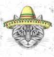 hipster animal cat wearing a sombrero hat vector image