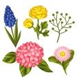Set of garden flowers Decorative hortense vector image
