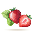 Watercolor strawberry isolated on white background vector image