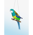 realistic colorful parrot is sitting on the vector image