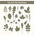 Herbarium vector image