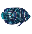 colored of emperor angelfish vector image