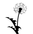 the dandelion flower vector image vector image