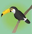 toco toucan vector image