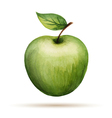 Watercolor Apple isolated on white background vector image vector image