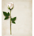Happy Mothers Day background Single white rose on vector image