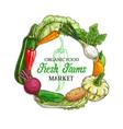 farm vegetables and veggies sketch food vector image vector image