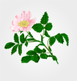 Flower eglantine twig with leaves and flower vector image vector image