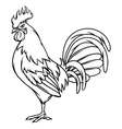 Hand drawn of black rooster on white vector image