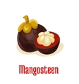 Mangosteen exotic tropical fruit icon vector image