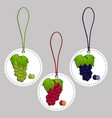 whole ripe berry grape vector image
