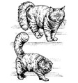 fluffy cat vector image vector image