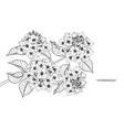 hydrangea flower drawing vector image vector image