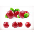 Lingonberry Cowberry sweet fruit Forest berry 3d vector image