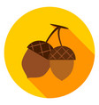 acorns circle icon vector image