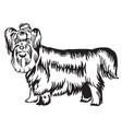 decorative standing portrait of yorkshire terrier vector image vector image