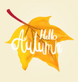 hello autumn calligraphy by hand on a maple leaf vector image vector image